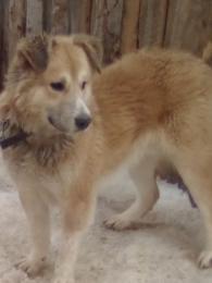 2019 1 29 kozepazsiai kutyakolyok
