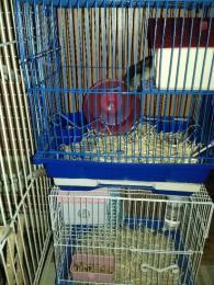 Törpe hörcsögok és papagájok