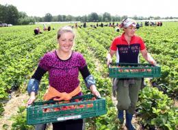 Virag es zoldseg kerteszet- Hollandia